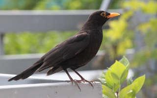 Наблюдение за птицами: пение и питание птиц, строение пера.