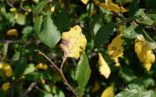 Почему происходит смена времен года и желтеют листья?