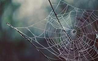 Изучаем пауков: виды, описание, чем питаются.