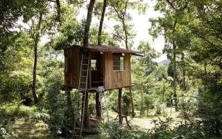 Построй свой дом на дереве