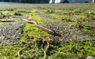 Дождевые черви: свойства и влияние на экологию