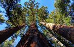 Изучаем деревья и определяем их возраст