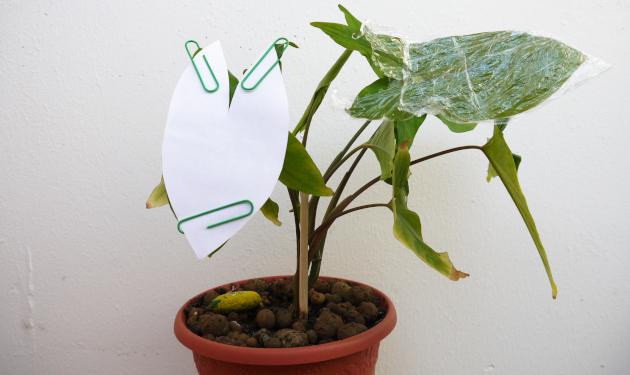 Растение накрытой бумагой и полиэтиленовой пленкой